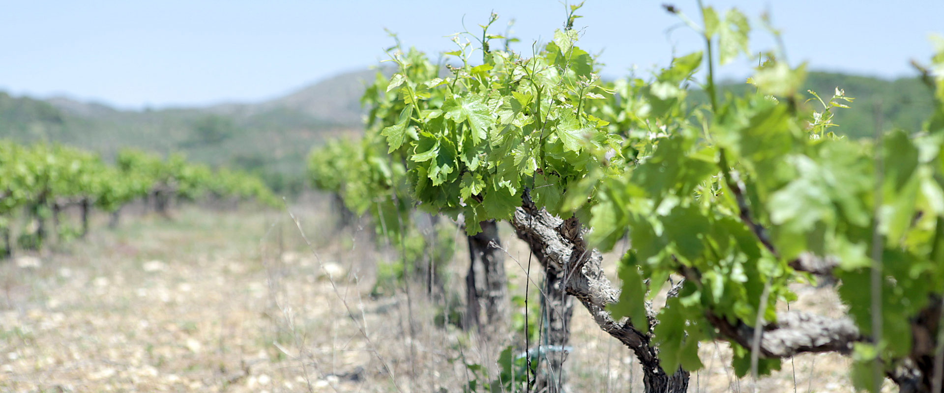 Nestor Winery - Our vineyards